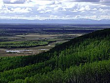 View of the Alaska Range from the Tanana Valley State Forest.