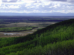 Nenana Ridge in Tanana Valley State Forest